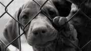 Broward County Clear the Shelters Pet Adoption